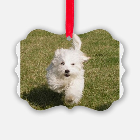 Run Bichon Run Ornament