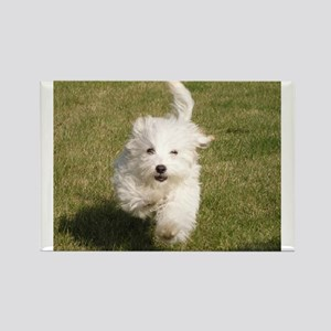 Run Bichon Run Magnets