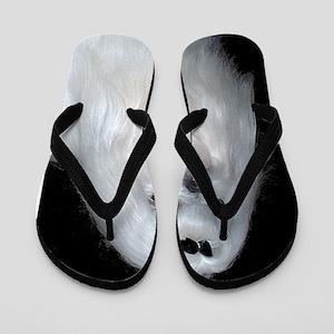 maltese Flip Flops