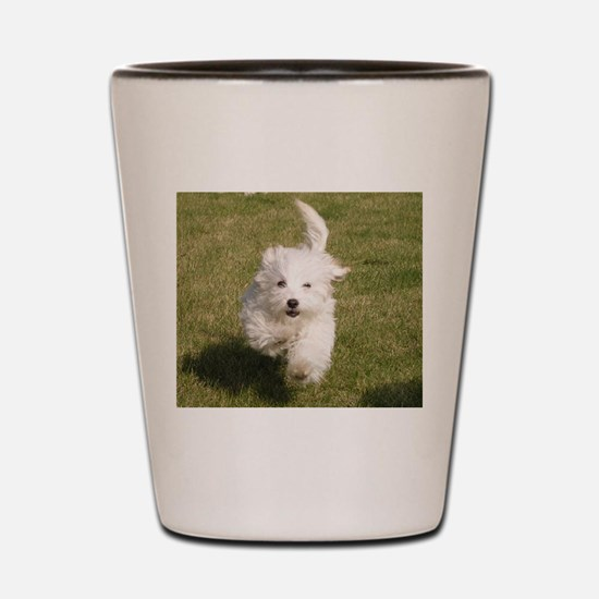 Run Bichon Run Shot Glass