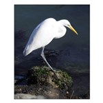 Great Egret Posters