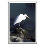 Great Egret Banner