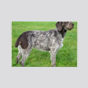 german wirehaired pointer liver full Magnets
