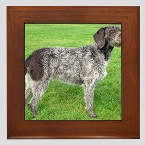 german wirehaired pointer liver full Framed Tile