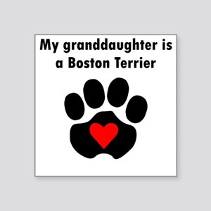 My Granddaughter Is A Boston Terrier Sticker