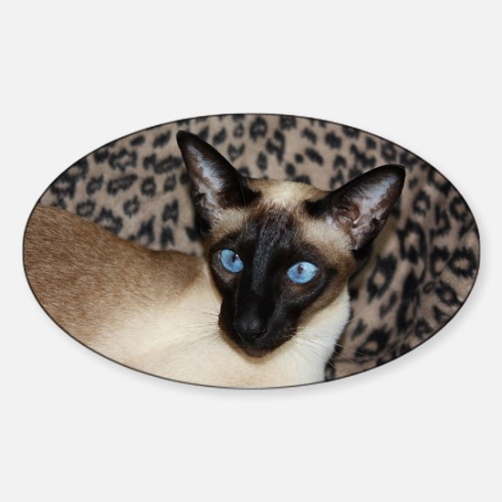 Seal Point Siamese Cat Jazell with  Sticker (Oval)