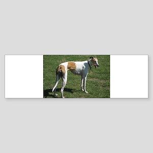 greyhound full Bumper Sticker