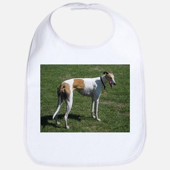 greyhound full Bib