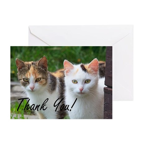 Thank You Cats Greeting Cards (Pk Of 20) Greeting