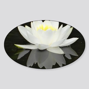 White water lily with black backgro Sticker (Oval)