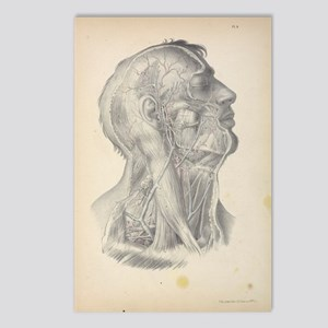Anatomy Drawing Postcards (Package of 8)