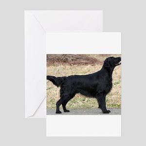 flat coated retriever black full Greeting Cards