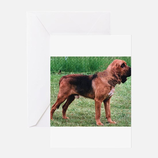 bloodhound full Greeting Cards