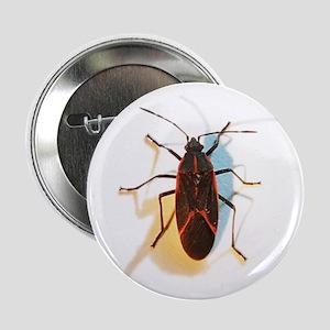 Boxelder Bug Button