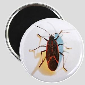 Boxelder Bug Magnet