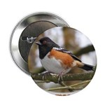 Spotted Towhee Button