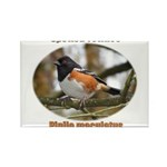Spotted Towhee Rectangle Magnet (100 pack)