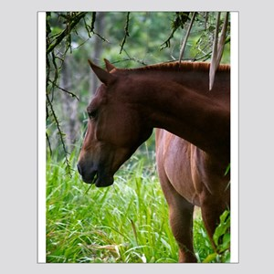 Costa Rica horse Posters