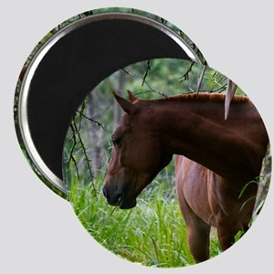 Costa Rica horse Magnets