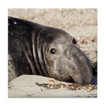 Northern Elephant Seal Tile Coaster