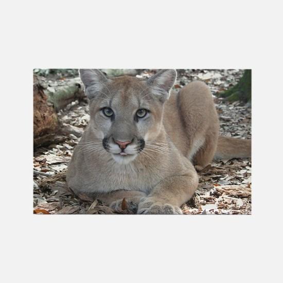 Cougar Artemis Magnets