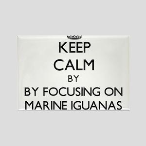 Keep calm by focusing on Marine Iguanas Magnets