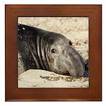 Northern Elephant Seal Framed Tile