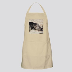 Northern Elephant Seal Apron