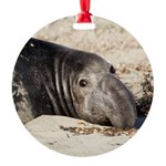 Northern Elephant Seal Ornament