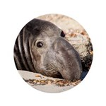 Northern Elephant Seal 3.5