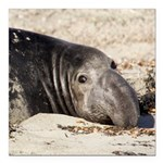 Northern Elephant Seal Square Car Magnet 3