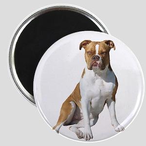 Am Bulldog 2 (Brn-W) Magnet