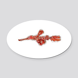 Harlequin Ghost Pipefish Oval Car Magnet