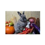 Teddy-Cornucopia Bunny Magnets