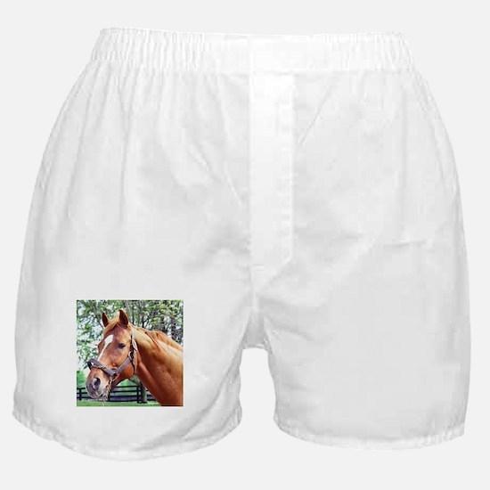 AFFIRMED Boxer Shorts