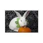 Romeo-Halloween Bunny Magnets