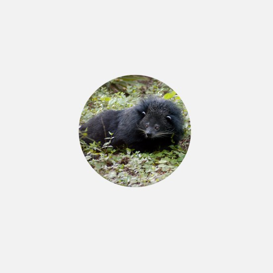 Bearcat Binturong Mini Button