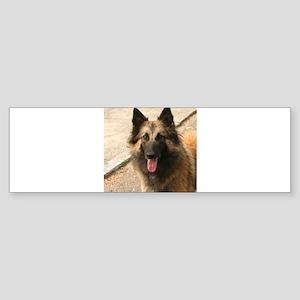 Belgian Shepherd Dog (Tervuren) Bumper Sticker
