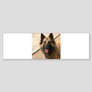 Belgian Shepherd Dog (Tervuren) Bumper Sticker