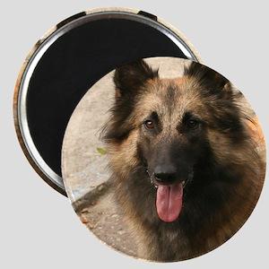 Belgian Shepherd Dog (Tervuren) Magnets