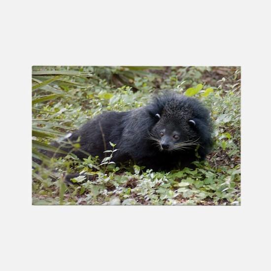 Bearcat Binturong Magnets