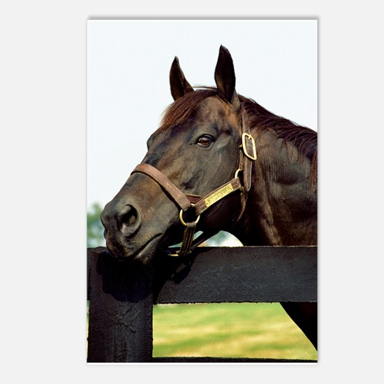 SEATTLE SLEW Postcards (Package Of 8) Postcards (P