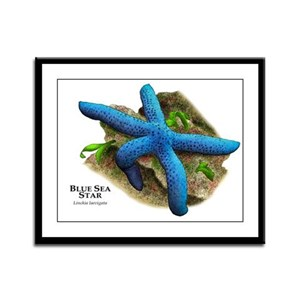 Blue Sea Star Framed Panel Print
