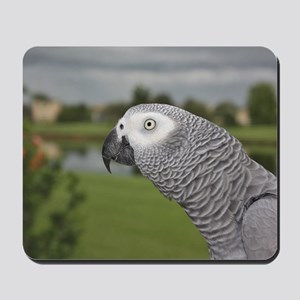 African Grey Parrot lake view Mousepad