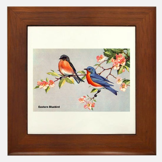 Eastern Bluebird Bird Framed Tile