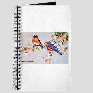 Eastern Bluebird Bird Journal