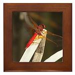 Red Dragonfly Framed Tile