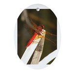 Red Dragonfly Oval Ornament