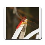 Red Dragonfly Mousepad