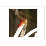Red Dragonfly Small Poster